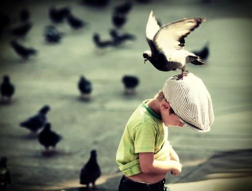 Pigeon Head - Moritz Wahl